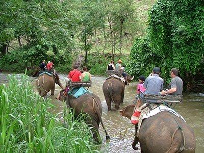 safari-phuket